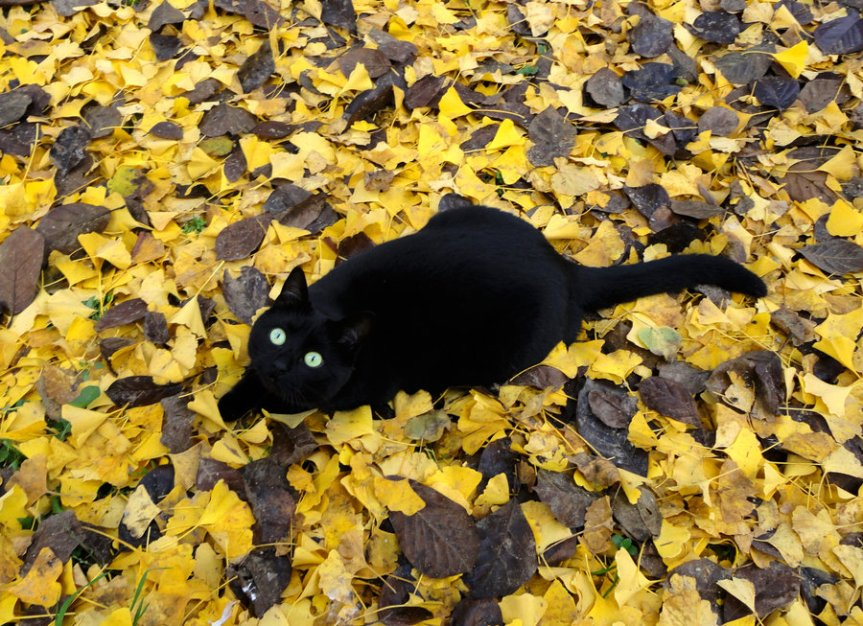 Video: Potions~ Black CatOil