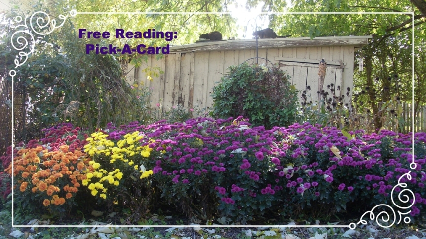 Updated: Free Reading ~Pick-a-Card