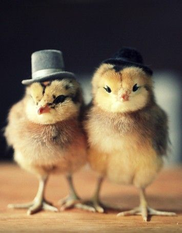 How Not to Pick Up Chicks (@ my OtherBlog!)
